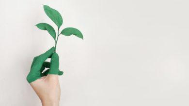 Photo of Economia e meio ambiente, qual a relação?